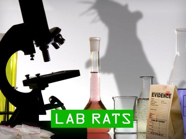 lab rats_04